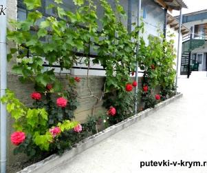 Гостевой дом «Севиля» Курортное Феодосия